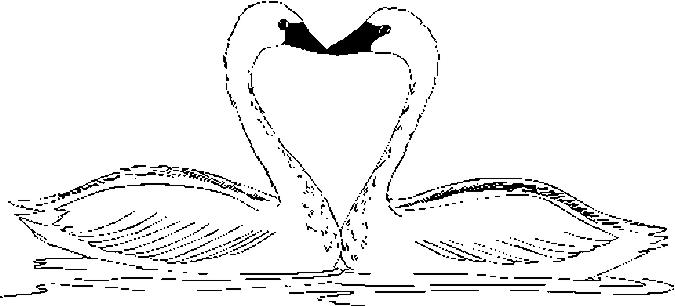 Disegno Da Colorare Amore Tra Cigni
