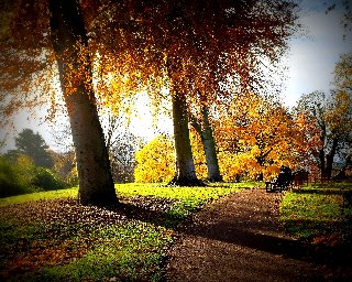 Foto paesaggio romantiche panchine lungo sentiero e alberi for Immagini autunno hd