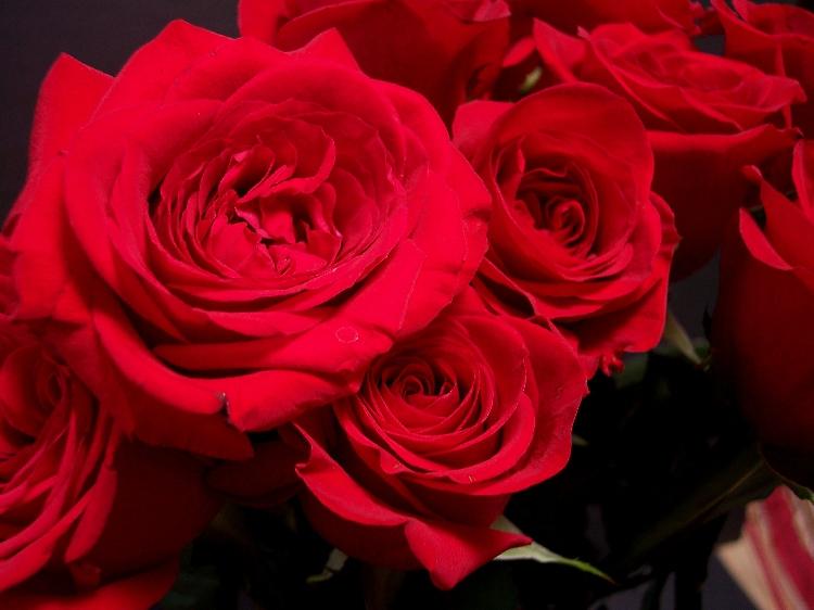 Video damore giardino di rose e con immagini animate d - Giardino con rose ...